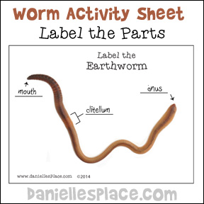 Label the Earthworm Activity Sheet