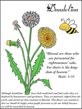 Blessed are the Persecuted Dandelion Picture
